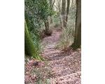 Walk 12 - The Knapp or Elephant Walk