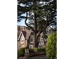 All About Malvern's Marvellous Trees