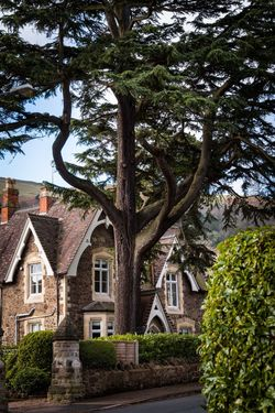 All About Malvern's Marvellous Trees - Malvern's Marvellous Trees
