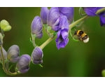 How to attract pollinating insects in your garden