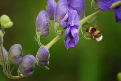 How to attract pollinating insects in your garden - Green Fingers