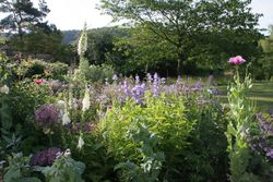 Foxdale Open Garden Colwall - Open Garden at Foxdale, Colwall