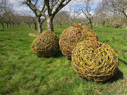 Willow Weaving with Victoria Westaway in Coddington -
