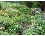 Phelps Cottage Open Garden