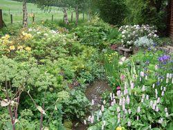 Phelps Cottage Open Garden - Phelps Cottage Garden