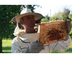 All About Beekeepers