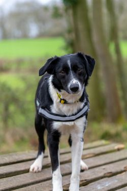 Worcestershire Animal Rescue Shelter - Worcestershire Animal Rescue Shelter