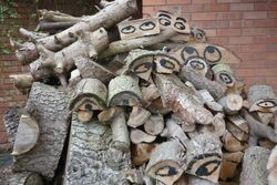 Day 28 - 28 January - Wood with eyes